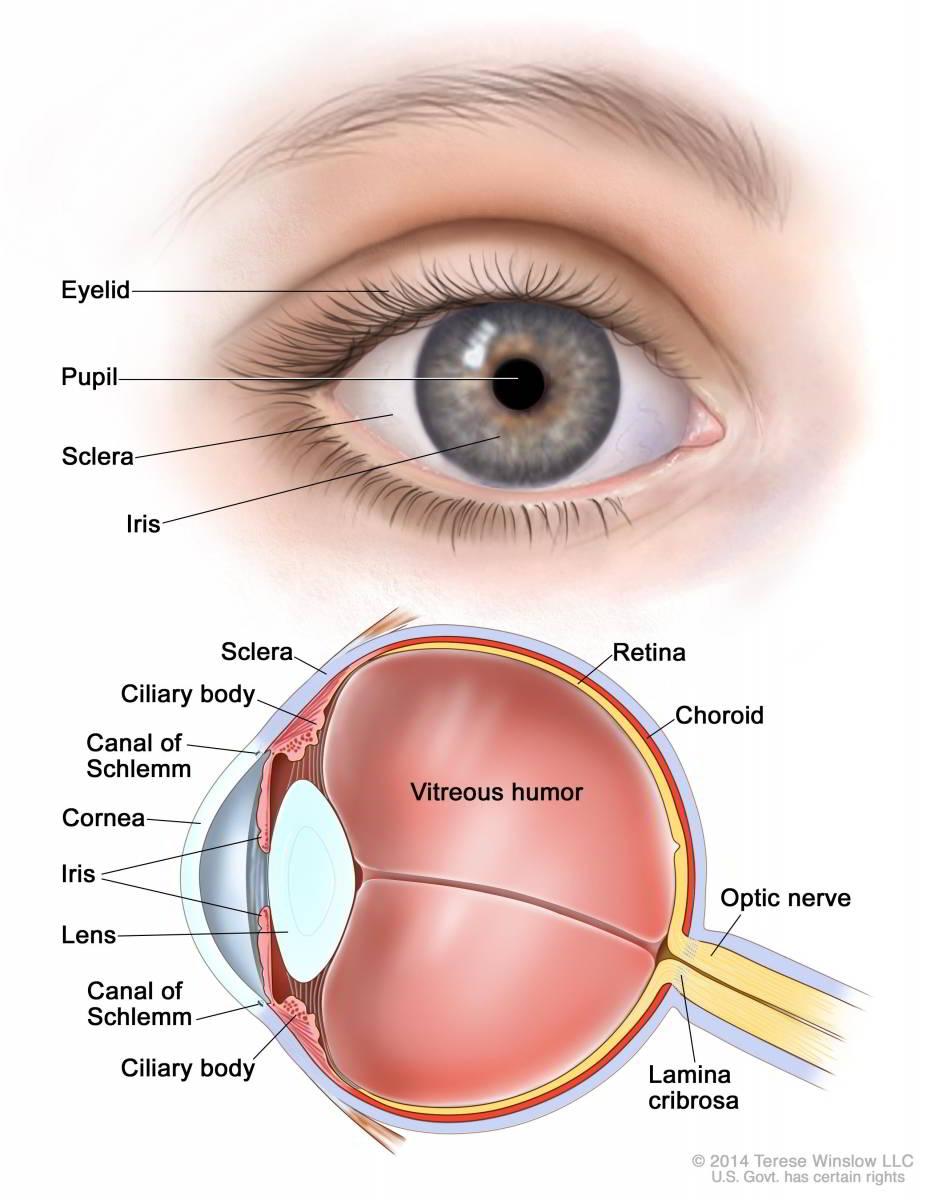 Giai đoạn ung thư mắt