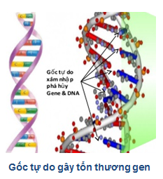 goc-tu-do-gay-ton-thuong-gen