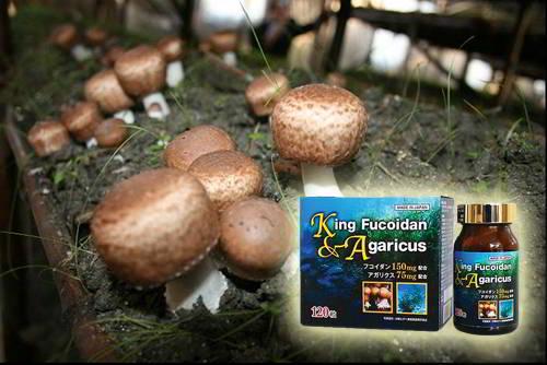 king fucoidan agaricus