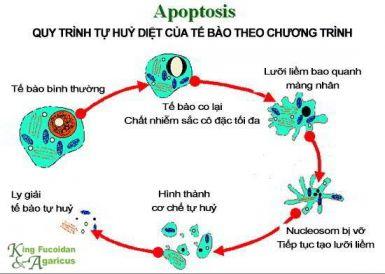 Ba khả năng chống lại ung thư chỉ có ở Fucoidan